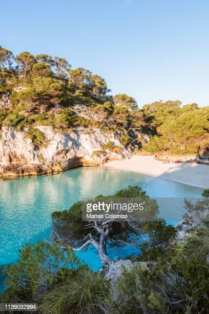 tree and beach at sunrise, cala macarelleta, spain - カラマカレラ ストックフォトと画像