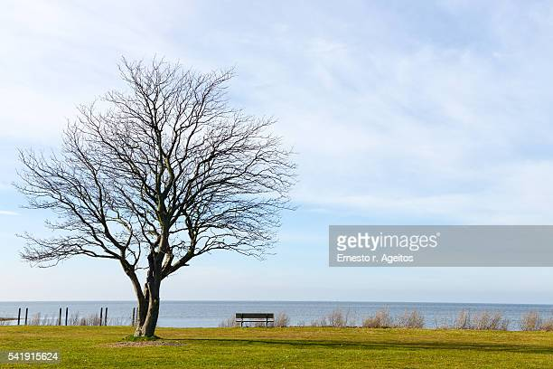 Tree and bench facing the sea