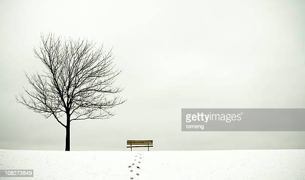 Tree and Bench in Winter