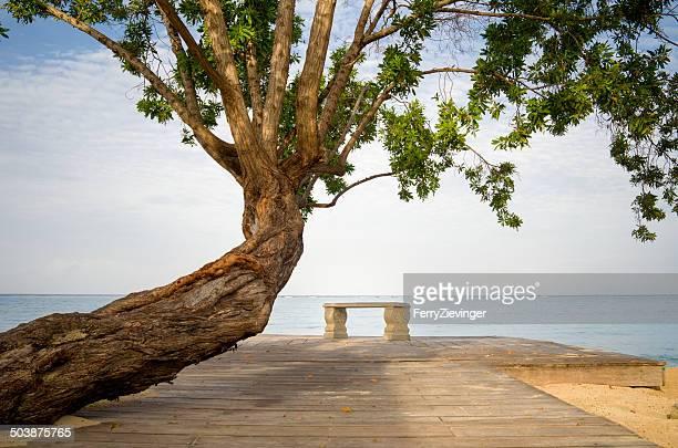 Tree and bench on the beach, Jamaica, Caribbean