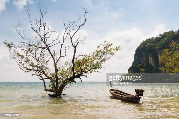 Tree and boat on Andaman sea, Krabi, Thailand