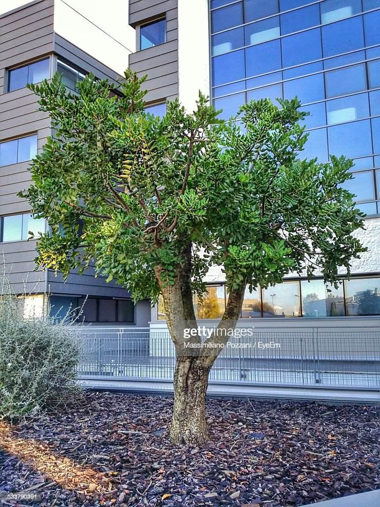 Tree And Buildings In City : Foto stock