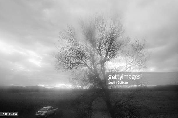 A tree and car are seen October 16 2004 near Wakefield Ohio