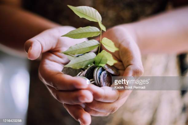un arbre et des pièces dans une main - responsabilité photos et images de collection