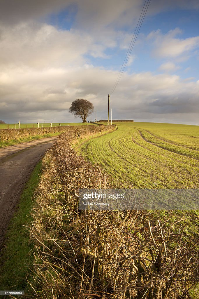 Tree and curved path....... : Stock Photo