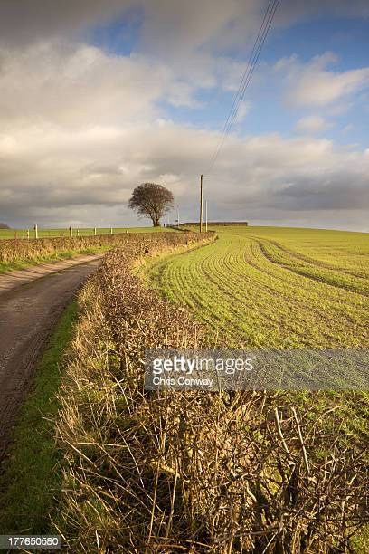 tree and curved path....... - st helens england stock pictures, royalty-free photos & images