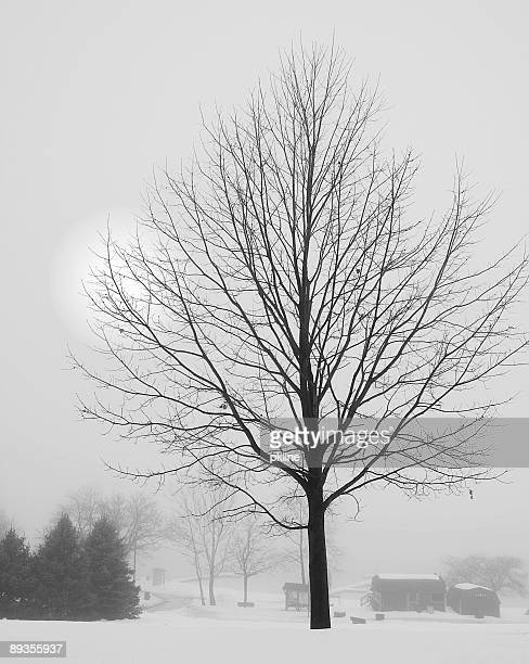 Tree and Farm - Winter