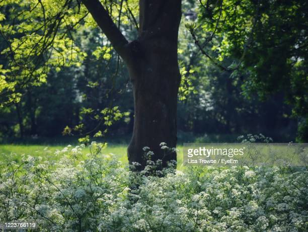 tree and flowers growing in field - esher stock pictures, royalty-free photos & images