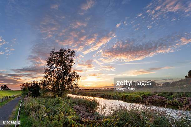 tree and footpath at sunset at ouse washes, the fens, cambridgeshire, east anglia, uk - ouse river stock photos and pictures