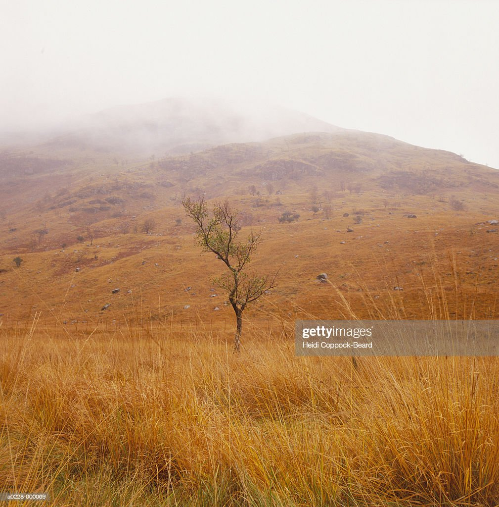 Tree and Hills : Stock Photo