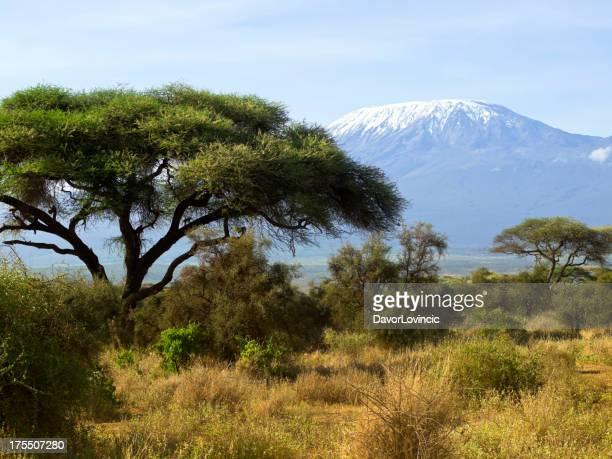 Tree and Kilimanjaro