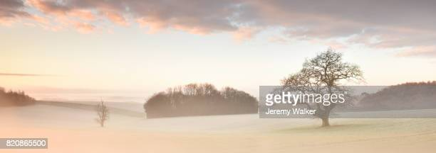 tree and meadow in mist. - meadow walker stock pictures, royalty-free photos & images