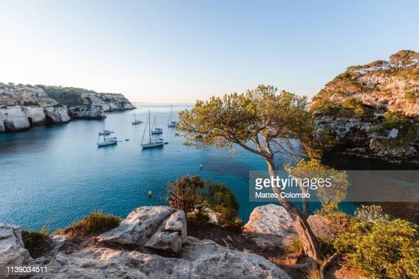 tree and mediterranean sea at sunrise, menorca - カラマカレラ ストックフォトと画像