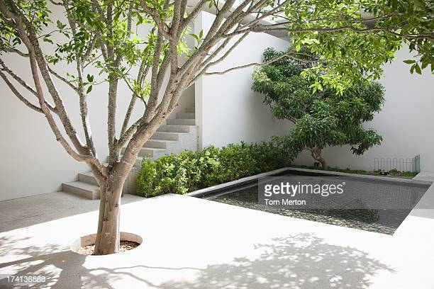 tree and pool in courtyard - courtyard stock pictures, royalty-free photos & images