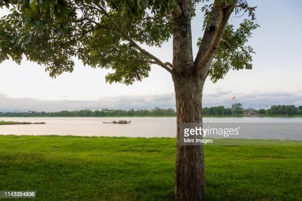 tree and river - bandiera comunista foto e immagini stock