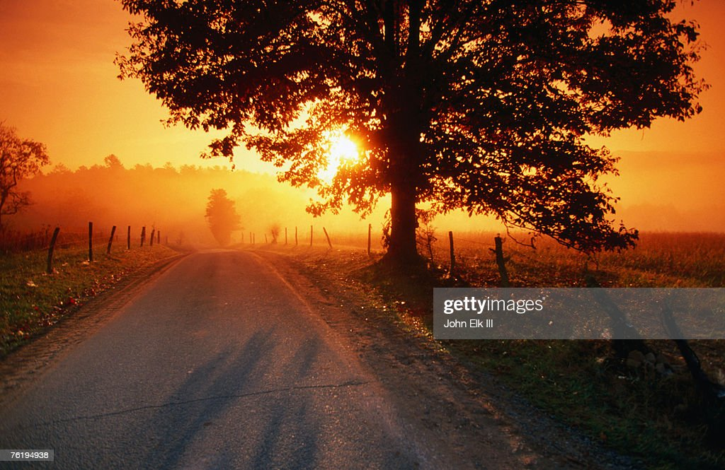 Tree and road at sunrise, Cades Cove, Great Smoky Mountains National Park, Tennessee, United States of America, North America : Stock Photo