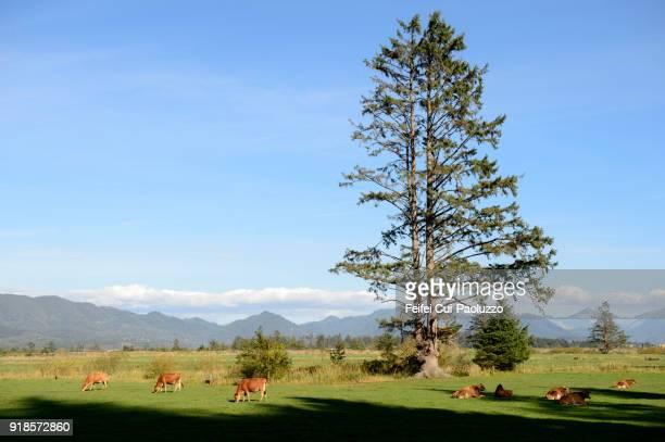 Tree and rural scene at Tillamook, Oregon, USA