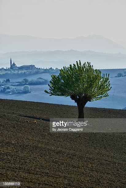 tree and sanctuary at macerata - jacopo caggiano stock pictures, royalty-free photos & images
