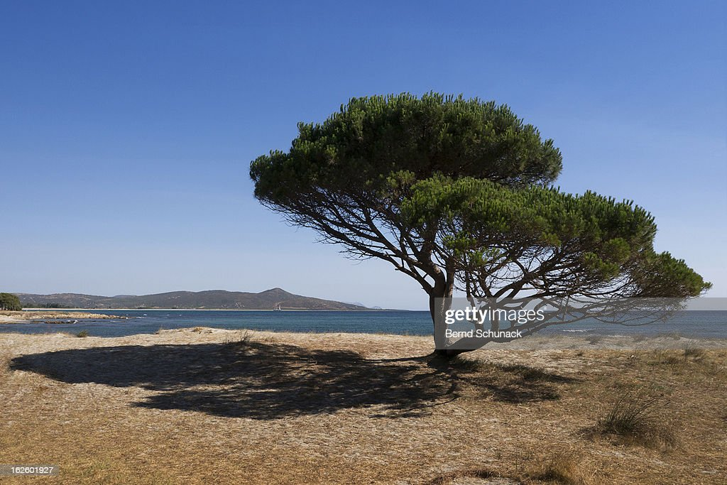 Tree And Shadow : Stock-Foto