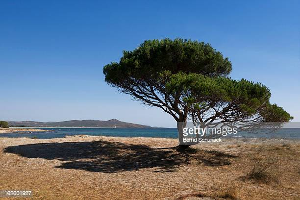 tree and shadow - bernd schunack stock pictures, royalty-free photos & images