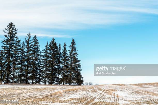 Tree and Sky - Half and Half