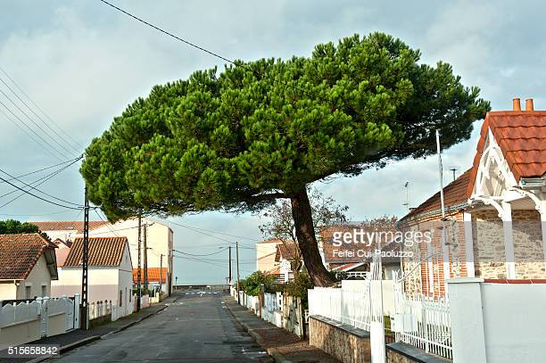 Tree and street view of Saint-Brevin-les-Pins of Pays de la Loire regiion in Western France