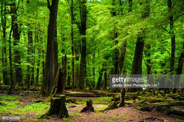 Tree and stumps in dense forest