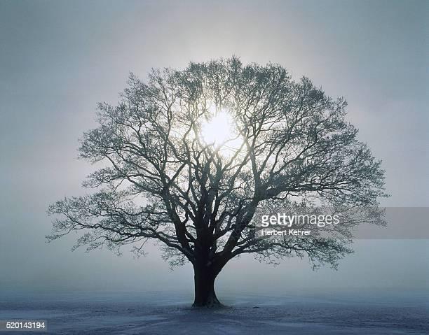 tree and sunrise - eén boom stockfoto's en -beelden