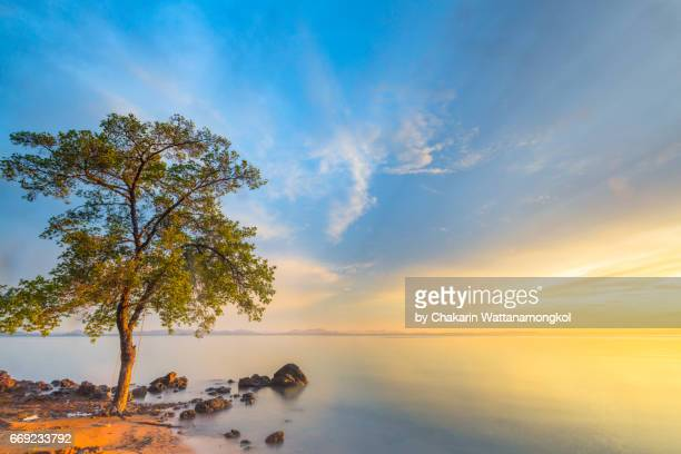 Tree and Sunrise Sky background