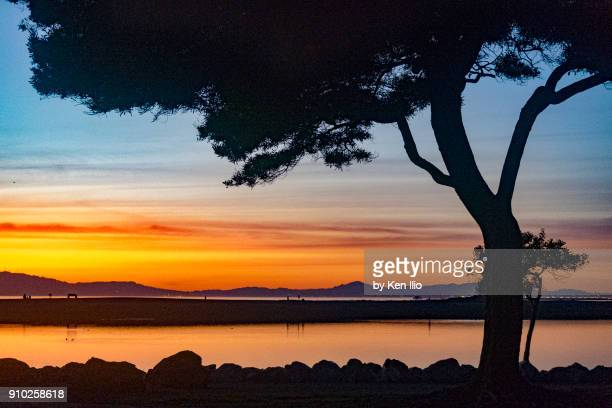 tree and sunset - san leandro stock photos and pictures