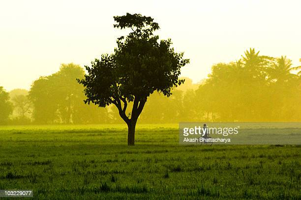 tree and the cycle - karnataka stock pictures, royalty-free photos & images