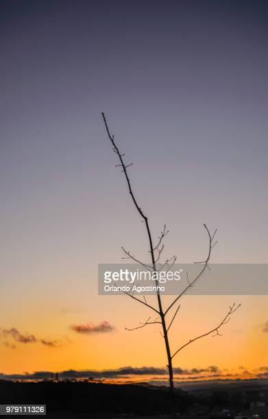 tree and the dusk time - special:whatlinkshere/file:lucerne_circle,_orlando,_fl.jpg stock pictures, royalty-free photos & images