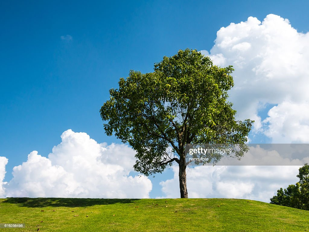 Tree ans sky : Stock Photo