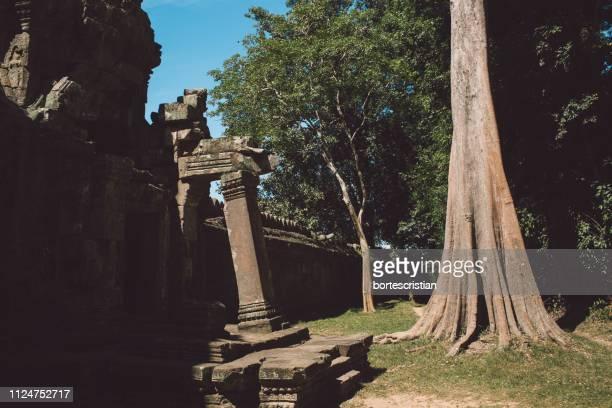 tree at historic temple - bortes stock-fotos und bilder