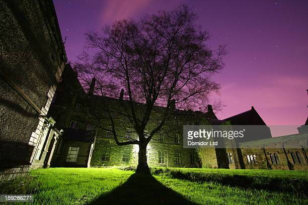 Tree at night, outside a Roman Catholic seminary.