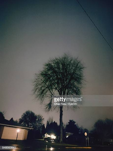 tree at night - neu stock pictures, royalty-free photos & images