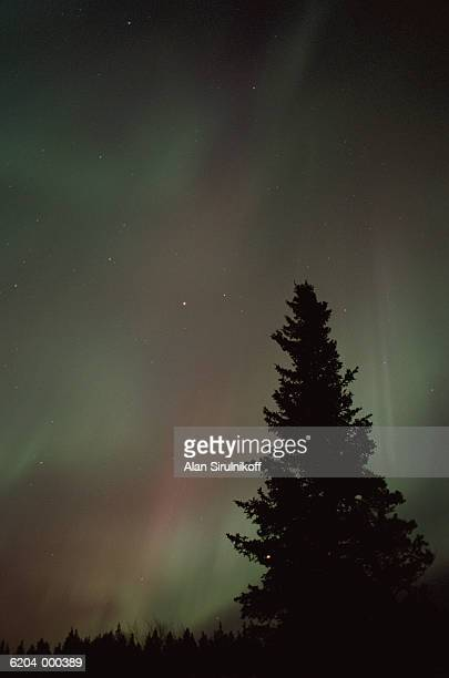 tree at night - sirulnikoff stock pictures, royalty-free photos & images