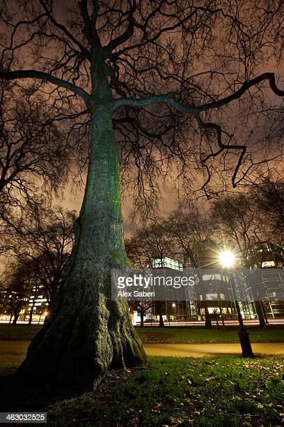 a tree at nighttime in hyde park, london. - alex saberi stock pictures, royalty-free photos & images