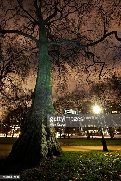 a tree at nighttime in hyde park, london. - alex saberi stock-fotos und bilder