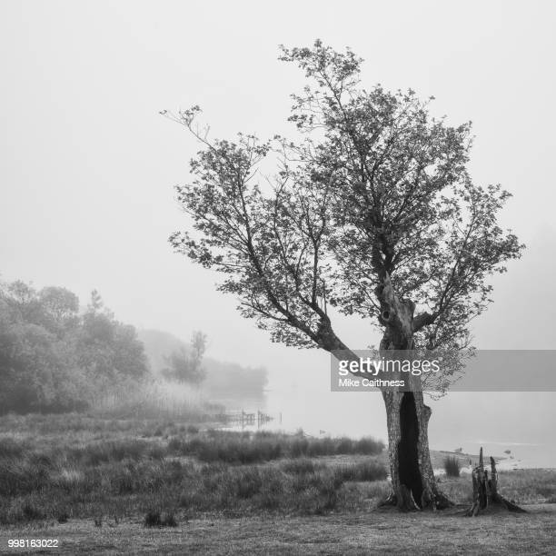 tree at strandshag bay - mike caithness stock pictures, royalty-free photos & images