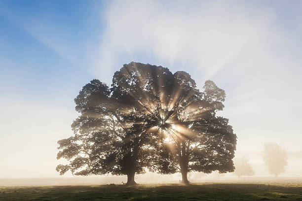 Tree at Sunrise, Usk Valley, South Wales, UK
