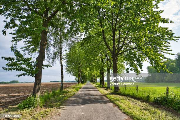 tree avenue after sunrise - boulevard stock pictures, royalty-free photos & images