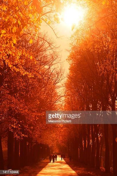 tree avenue in red - massimo pizzotti foto e immagini stock