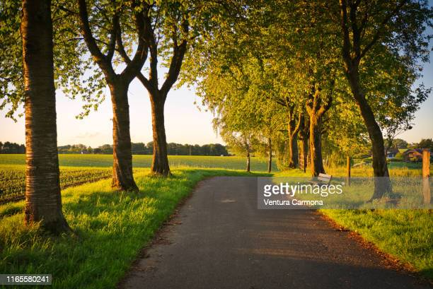 tree avenue in the evening - avenue stock pictures, royalty-free photos & images