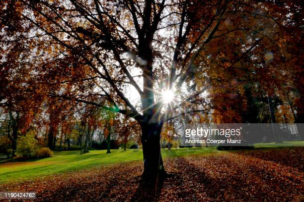 tree backlit autumn - andreas solar stock pictures, royalty-free photos & images