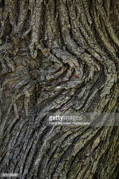 tree bark of a chestnut tree - heinz baumann photography stock-fotos und bilder