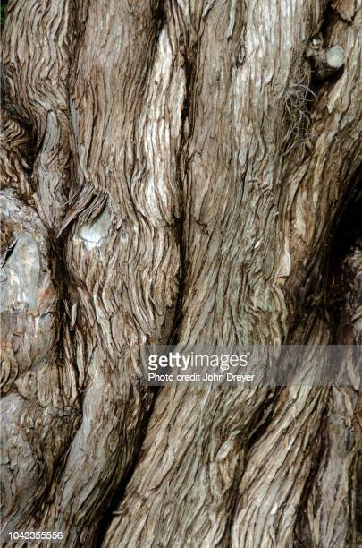 tree bark pattern - bark stock pictures, royalty-free photos & images
