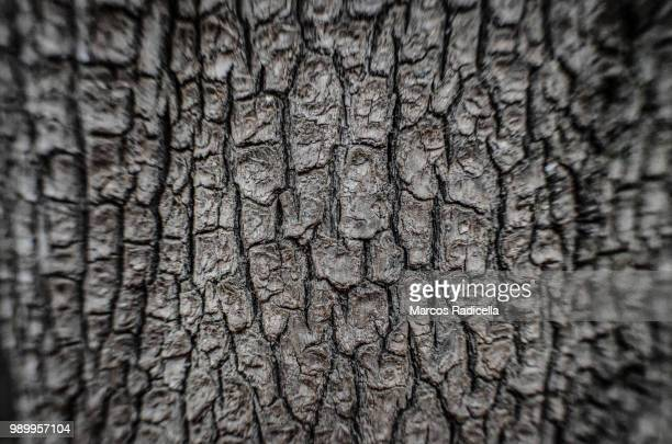 tree bark - radicella stock photos and pictures