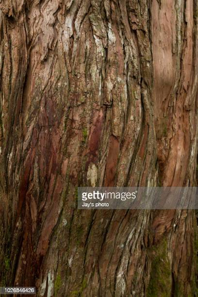tree bark texture - bark stock pictures, royalty-free photos & images