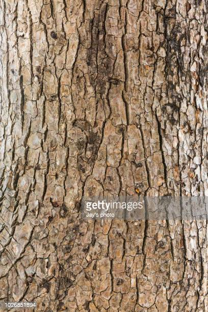tree bark texture - tree trunk stock pictures, royalty-free photos & images